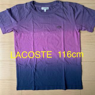 ラコステ(LACOSTE)のLACOSTE キッズTシャツ(Tシャツ/カットソー)