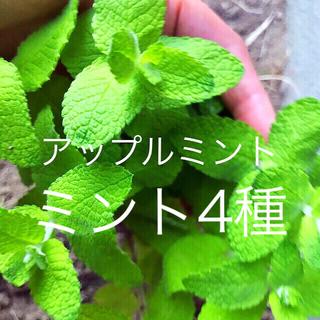 ハーブ4種セット根付き苗おまけ付き(野菜)