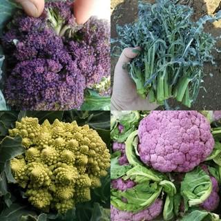りょさま専用〉野菜の種いろいろ(野菜)