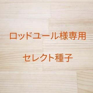 ロッドユール様専用 セレクト種子 4袋(野菜)