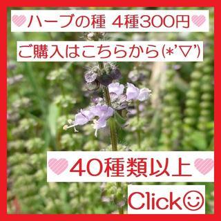 全44種♪ ハーブの種 お好きな物 4種類 セット(622)(その他)