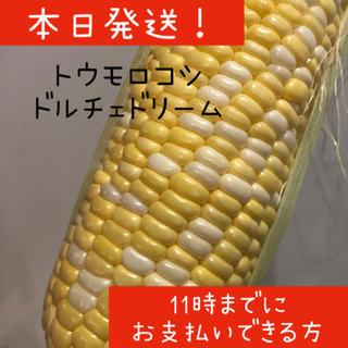 6/23本日発送 トウモロコシ ドルチェドリーム(野菜)
