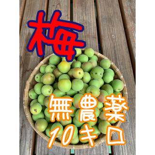 10キロ無農薬B品ワケあり群馬県産 生梅 送料込!梅酒 梅ジュース 梅シロップ(フルーツ)