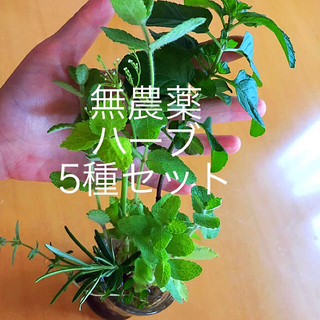 ハーブ5種セット(野菜)