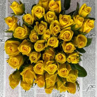 バラ 切り花 ゴールドラッシュ 60本 30センチ(その他)