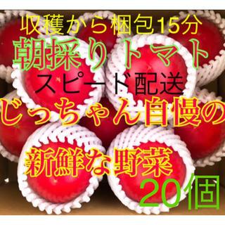 トマト とまと   キュウリ 胡瓜 きゅうり も売ってます!(野菜)