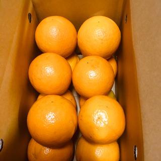 送料無料 お試し小箱 バレンシアオレンジ L 2kg 有田みかん 和歌山県産 (フルーツ)