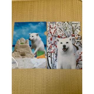 Softbank - お父さん犬 クリアファイル