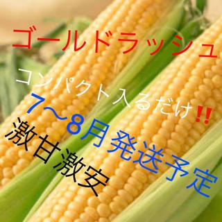 激甘すぎゴールドラッシュとうもろこしコンパクト入るだけ7〜8月中発送予定!(野菜)