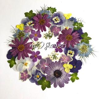 【elie様専用】035*姫かすみ草紫(ドライフラワー)