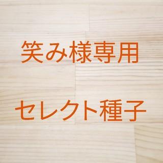 笑み様専用 セレクト種子(野菜)