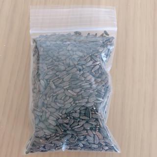 ゴボウシ 30g(健康茶)