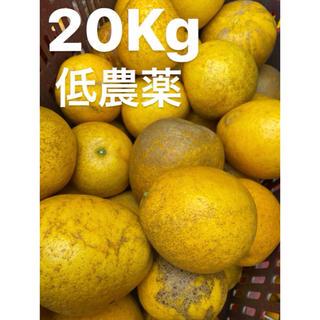 愛媛 低農薬 宇和ゴールド20Kg   河内晩柑 みかん(フルーツ)