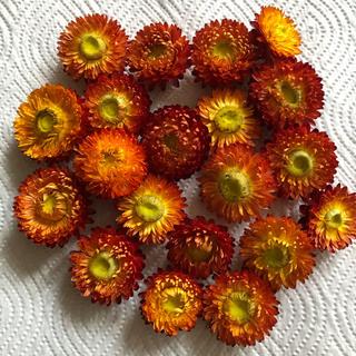 ドライフラワー花材ヘリクリサムオレンジ(ドライフラワー)
