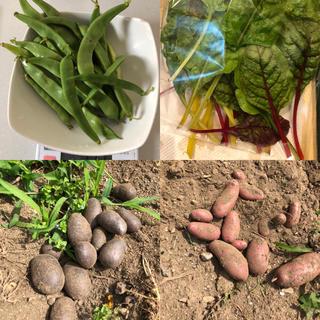 山梨県産無農薬野菜 おすすめセット 送料込(野菜)