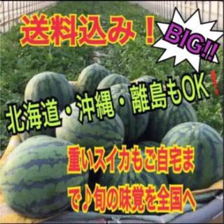 【御新規様¥4,999!】大迫力ビッグサイズ西瓜の匠厳選ブランド西瓜(超超特大)(フルーツ)