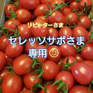 2㎏ セレッソサポさま専用です☺️ ミニトマト(野菜)
