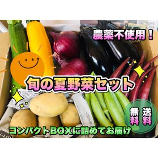 採りたて新鮮✧*。夏野菜コンパクトセット 〜畑からの直送便〜 無農薬(野菜)