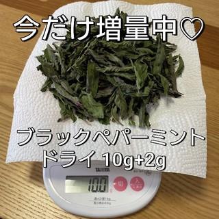 ブラックペパーミント ドライ(野菜)