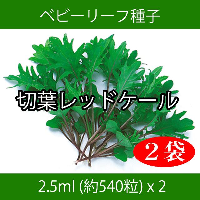 ベビーリーフ種子 B-37 切葉レッドケール 2.5ml 約540粒 x 2袋 食品/飲料/酒の食品(野菜)の商品写真