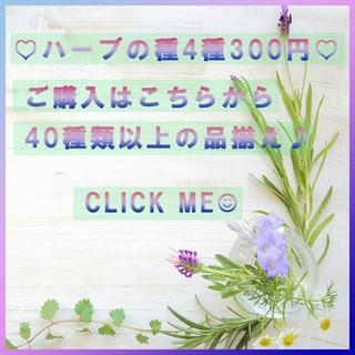 全44種♪ ハーブの種 お好きな物 4種類 セット(626)(その他)