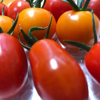 ミニトマト3種詰め合わせ3kg今季最終品(野菜)