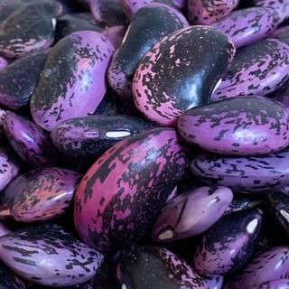 【農薬・化学肥料不使用】乾燥紫花豆 約500g 青森県産 2019年産(野菜)