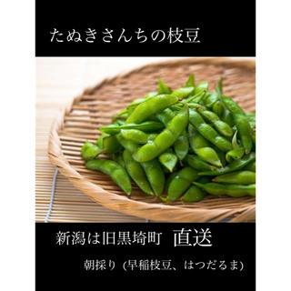 たぬきさんちの枝豆(はつだるま)2kg(野菜)