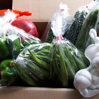 野菜詰め合わせ60サイズ (6種類程度)(野菜)