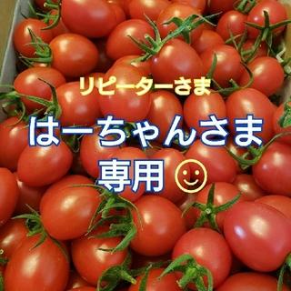 4㎏ はーちゃんさま専用です☺️ ミニトマト(野菜)