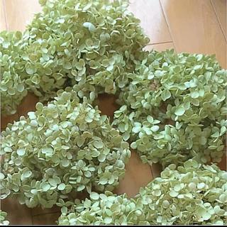 紫陽花アナベルドライフラワー花材ヘッドのみ5個(ドライフラワー)
