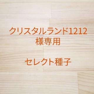 クリスタルランド1212様専用 セレクト種子 11袋(野菜)