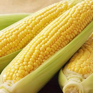 トウモロコシ ゴールドラッシュ(野菜)