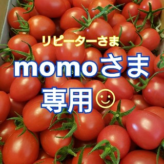 2㎏ momoさま専用です☺️ ミニトマト(野菜)