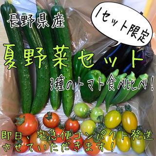 長野県産 夏野菜セット 3種のトマト食べ比べ!(野菜)
