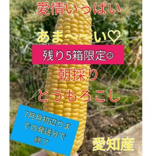 残り5箱! 甘さ太鼓判 朝採れとうもろこし(訳あり)(野菜)