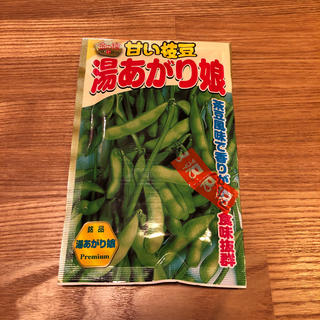 【開封済・残りがたくさんあるので出品】枝豆の種 湯あがり娘(野菜)