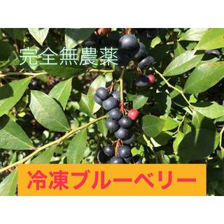 長崎県産!!完全無農薬!!冷凍ブルーベリー!!1.5K(フルーツ)