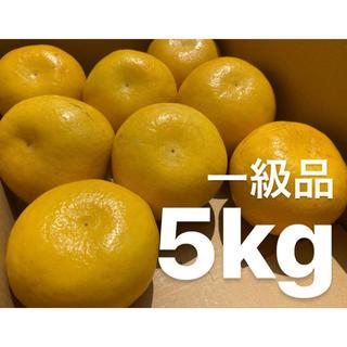 愛媛 一級品 宇和ゴールド 5Kg   河内晩柑 嵐ゴールド(フルーツ)