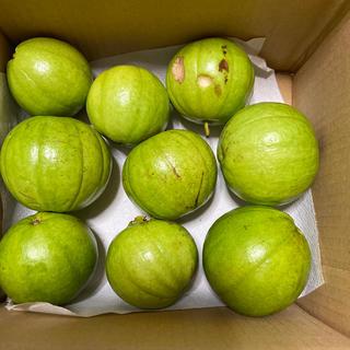グァバ サラダ 白 1キロ(フルーツ)
