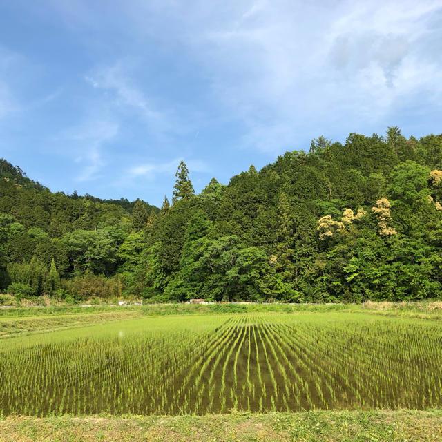 兵庫県丹波市産 コシヒカリ  白米5キロ 食品/飲料/酒の食品(米/穀物)の商品写真