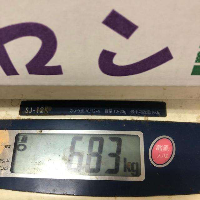 茨城県産タカミメロン1箱5個入り2L① 食品/飲料/酒の食品(フルーツ)の商品写真