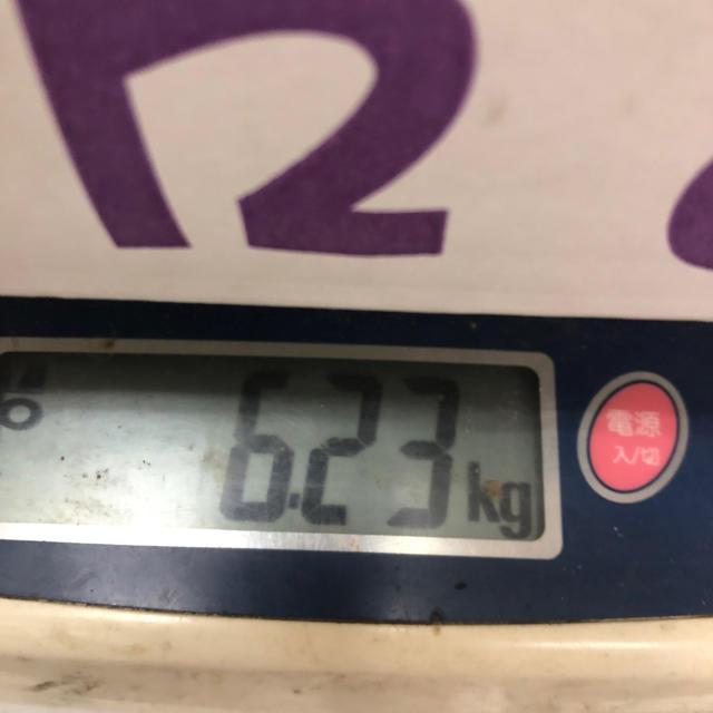 茨城県産タカミメロン1箱5個入り2L④ 食品/飲料/酒の食品(フルーツ)の商品写真