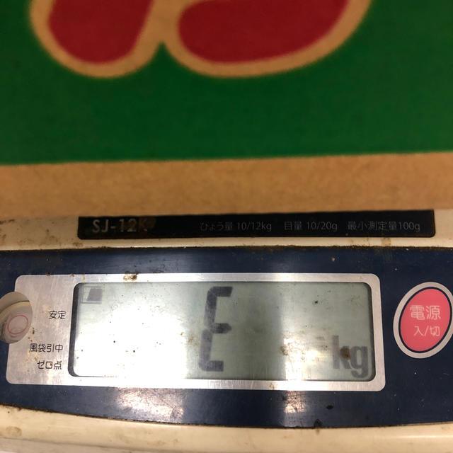 超大玉!千葉県産まるあさスイカ6L② 食品/飲料/酒の食品(フルーツ)の商品写真
