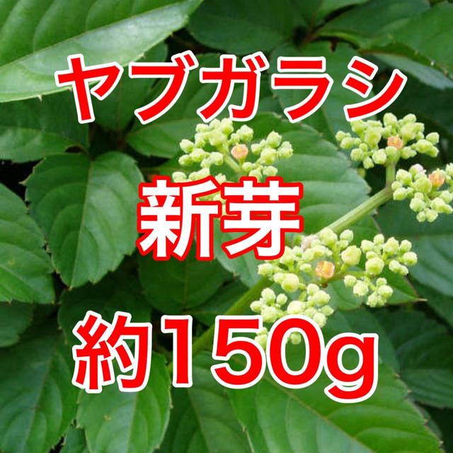 【山菜】ヤブガラシ 採りたて 新鮮 栄養満点 約150g 食品/飲料/酒の食品(野菜)の商品写真
