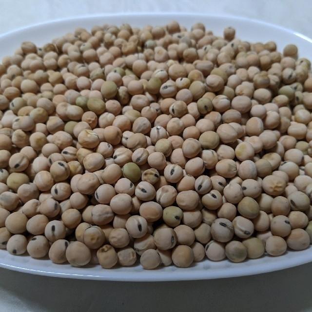 岡山県産  煮豆用  うすいえんどう  830グラム  無農薬 食品/飲料/酒の食品(野菜)の商品写真