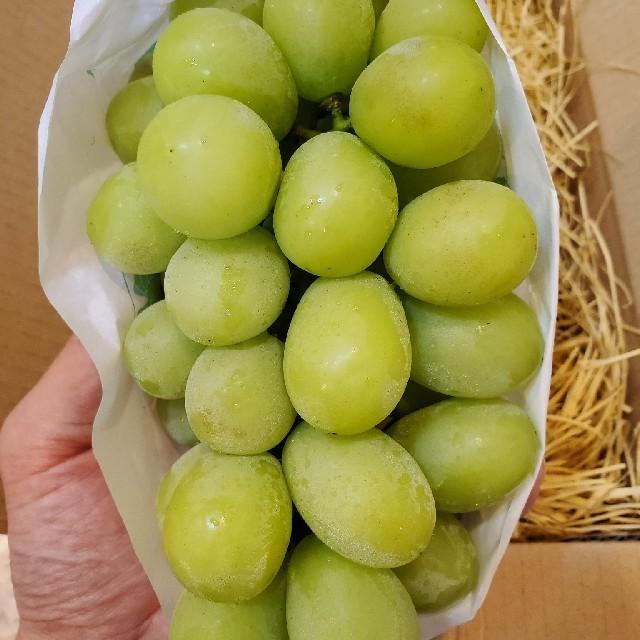 タイムセール!! とうとう入荷致しました!! 山梨県産「シャインマスカット」 食品/飲料/酒の食品(フルーツ)の商品写真