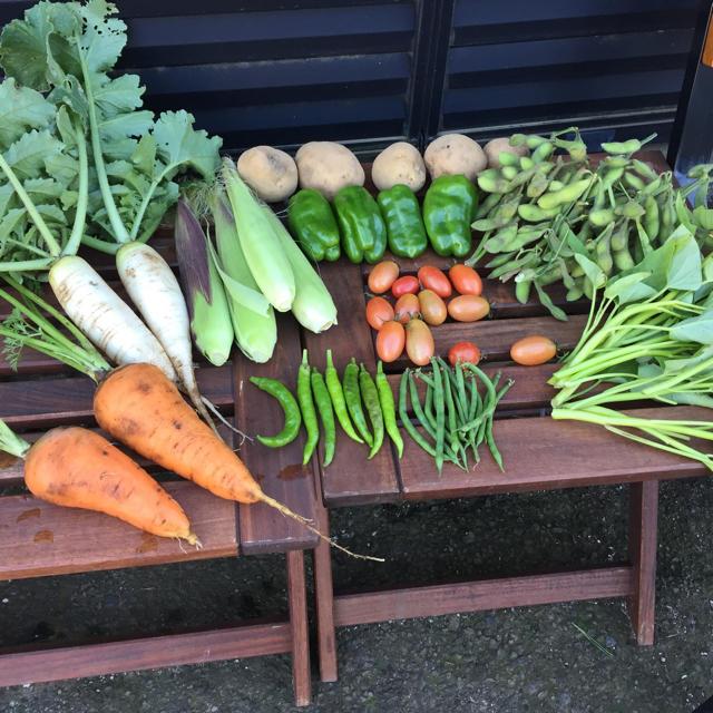 農薬・肥料不使用の野球セット お試し版 食品/飲料/酒の食品(野菜)の商品写真