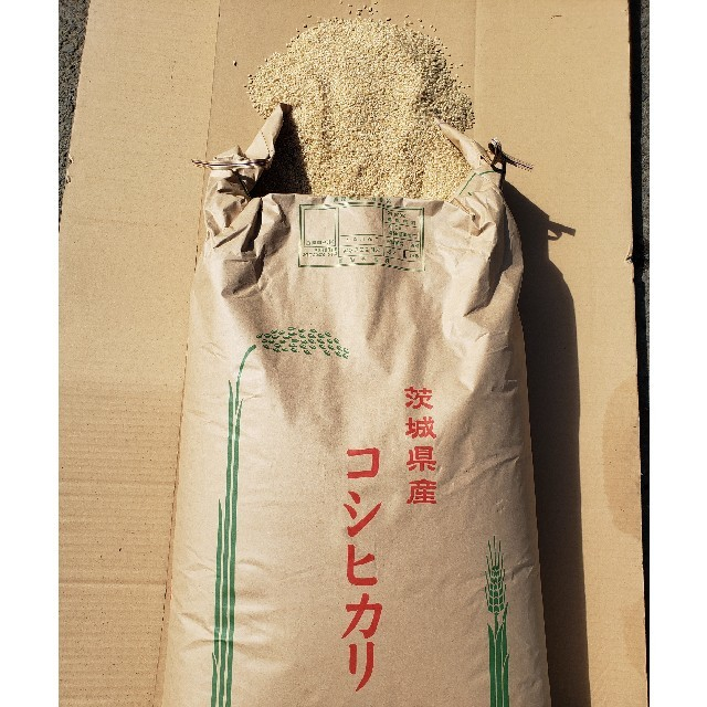 茨城県産コシヒカリ 食品/飲料/酒の食品(米/穀物)の商品写真