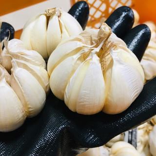 yokko199様専用国「倉敷ホワイト」3.6kgに増量  ※訳あり(野菜)
